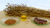 From_flax_to_linseed_oil.